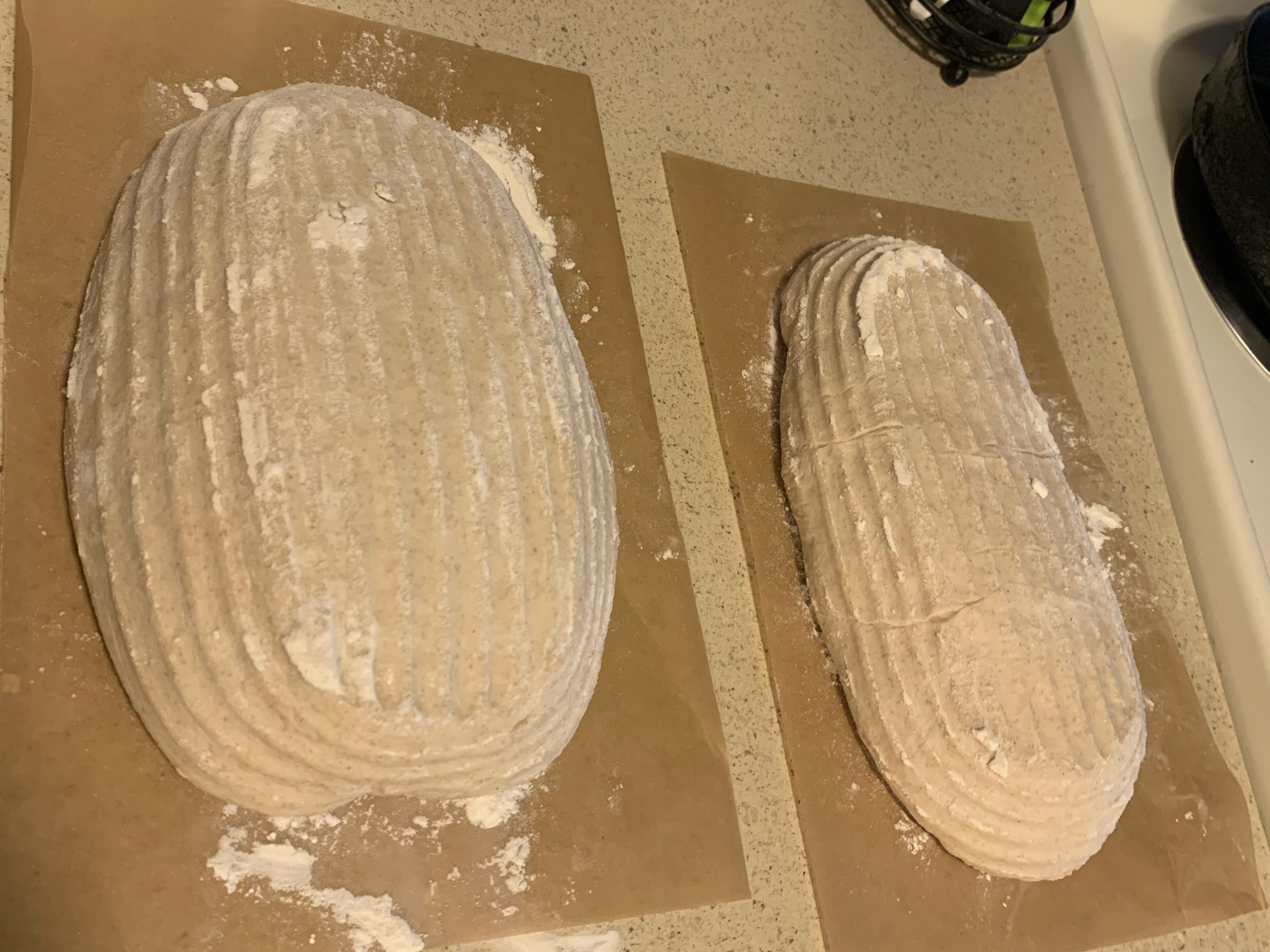 Fully proofed loaves ready to be scored and baked.