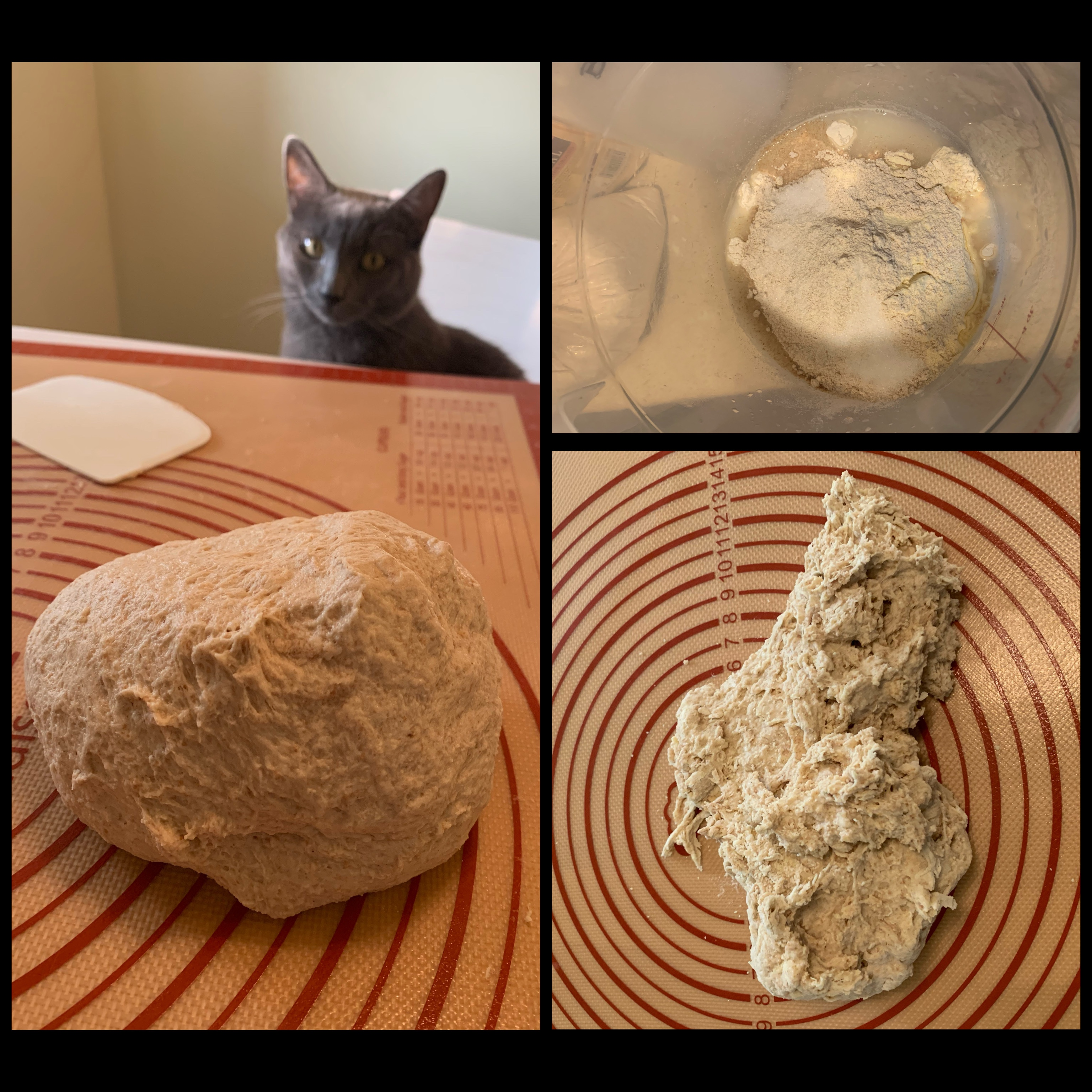 Left: ball of kneaded dough on rubber mat with grey cat in background staring at dough. Top right: dough ingredients unmixed in bottom of clear tub. Bottom right: shaggy, lightly mixed dough on rubber mat.