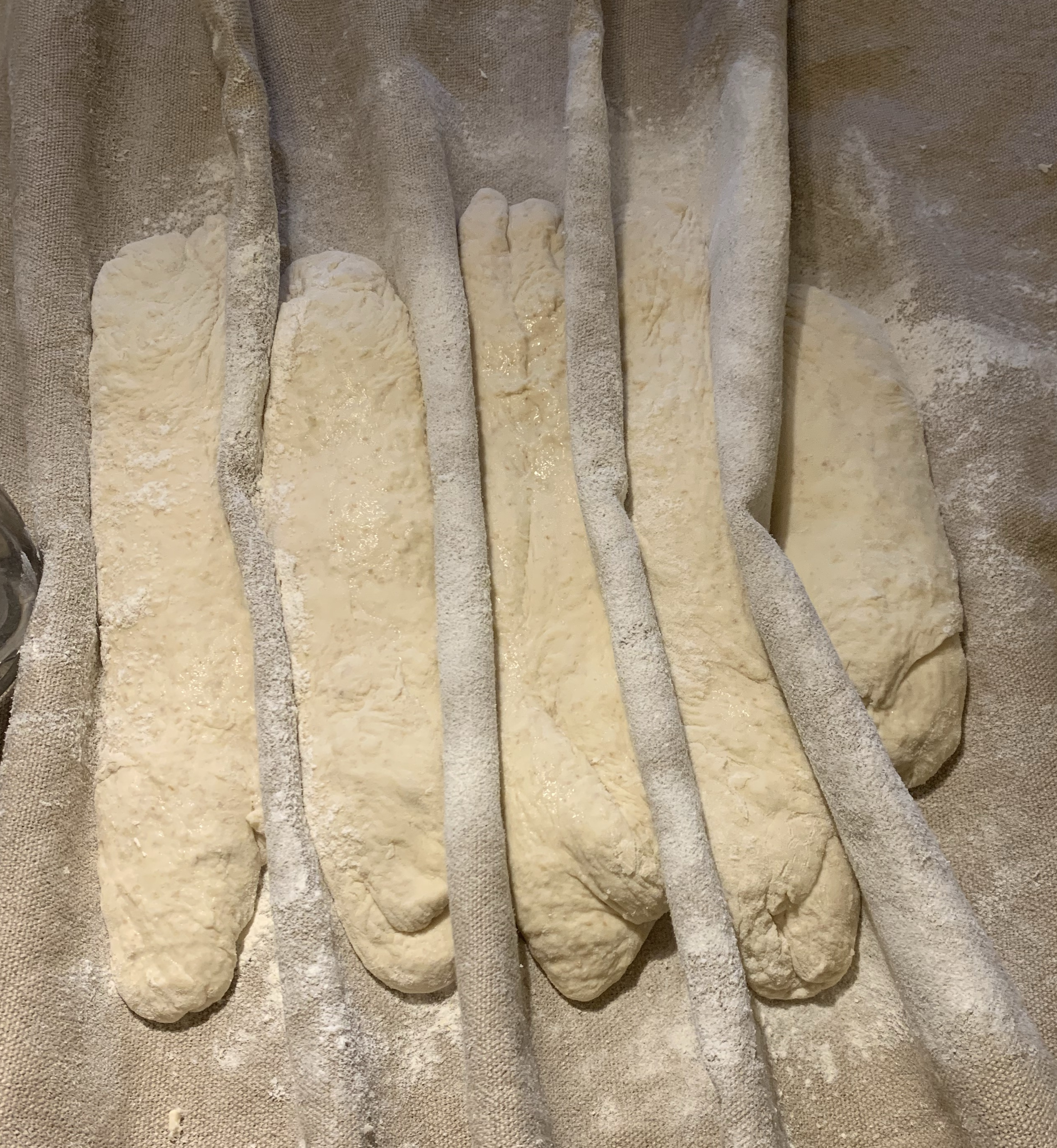 Five loaves of birote dough side by side in a couche.