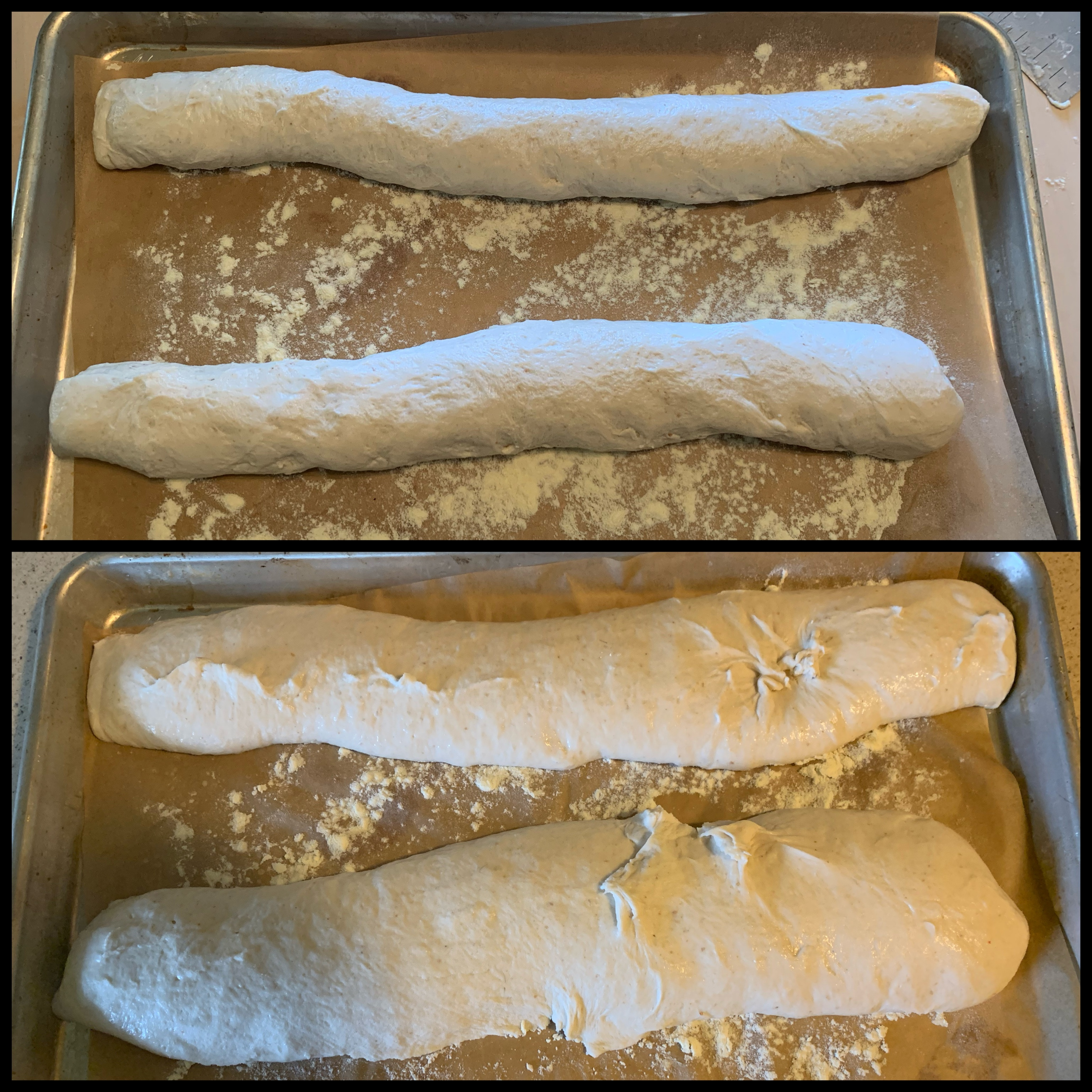 Top: rolls of unproofed dough on floured parchment paper on a baking sheet. Bottom: same set up, but the dough is expanded after proofing. Also, each roll has bits of pulled up and broken dough.