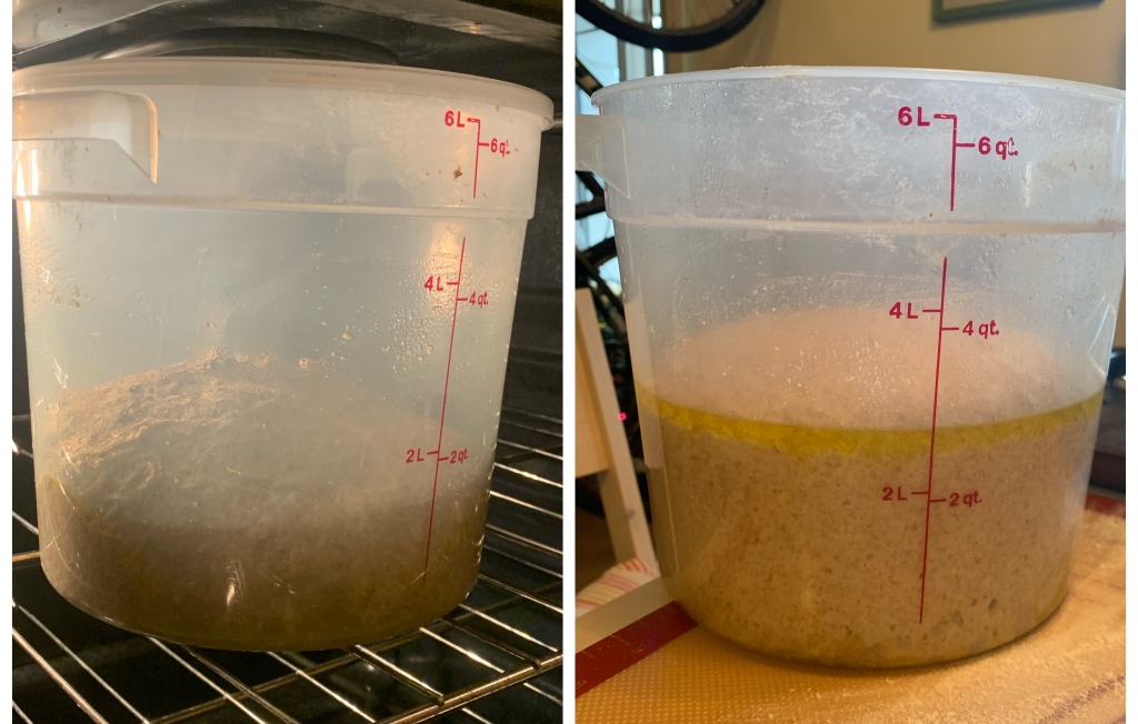 Left: newly kneaded dough in a cambro in the oven. The dough is risen to under the 2qt line. Right: same cambro and dough on the table. The dough is risen to almost 3qt.